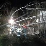 Eine Birke stürzte über die Straße