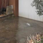 Das Wasser gelagt über die Garage in den Keller (800x600)