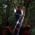 Der Stoffhund wird aus dem Baum gerettet