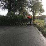 Mit der Motorkettensäge wird der Baum zerteilt